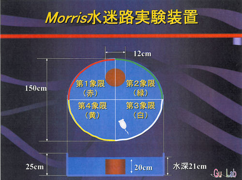 Morris水迷路実験.jpg